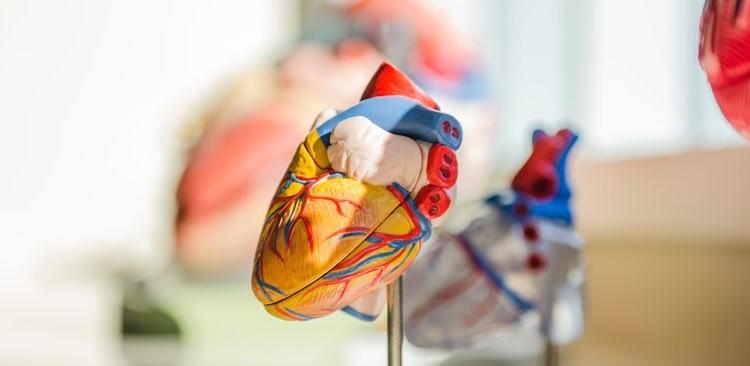Interna medicina s kardiologijo